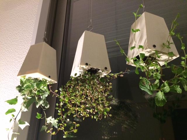 観葉植物とインテリア_e0190287_2351121.jpg