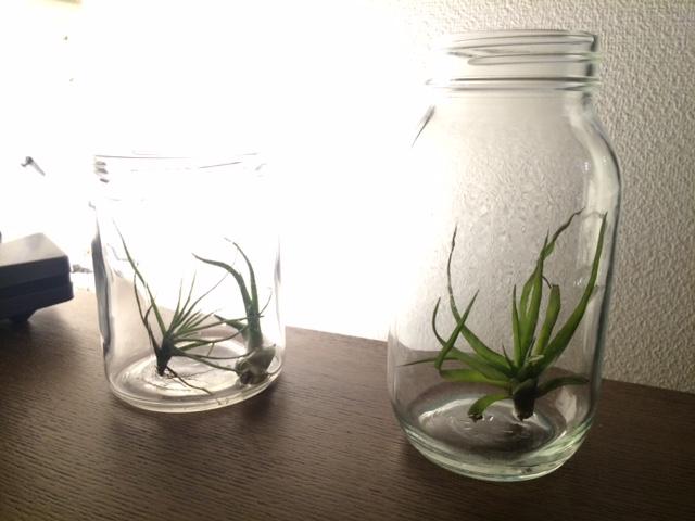 観葉植物とインテリア_e0190287_23514549.jpg