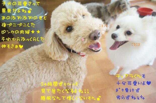 d0220513_1435415.jpg