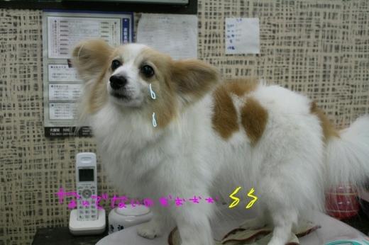 b0130018_00194959.jpg