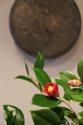 花だより 椿_a0279848_14374686.jpg