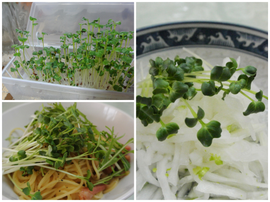 ミニ野菜工場 その2_c0063348_2131043.jpg