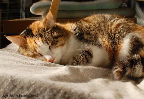 充電ステーションでぐっすりな猫たち_b0253205_03424055.jpg