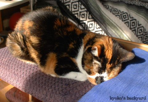 充電ステーションでぐっすりな猫たち_b0253205_03434158.jpg