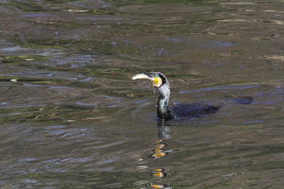 公園の池で魚を獲る  _b0190710_2136431.jpg