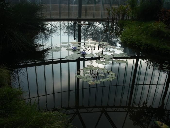 新宿御苑の風景_e0276411_2331087.jpg