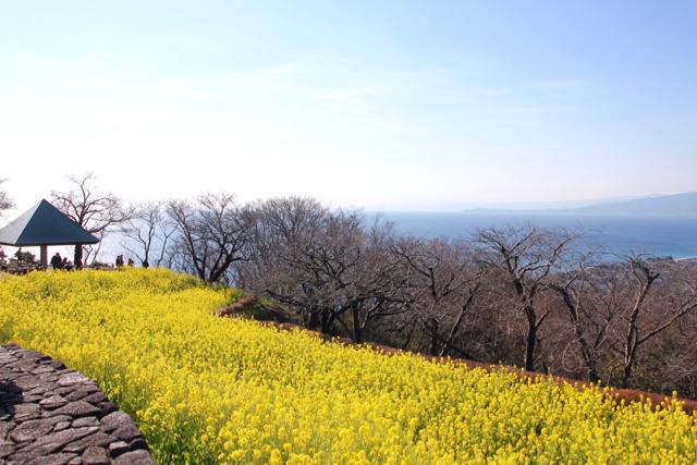 【吾妻山公園】part 1_f0348831_19183925.jpg