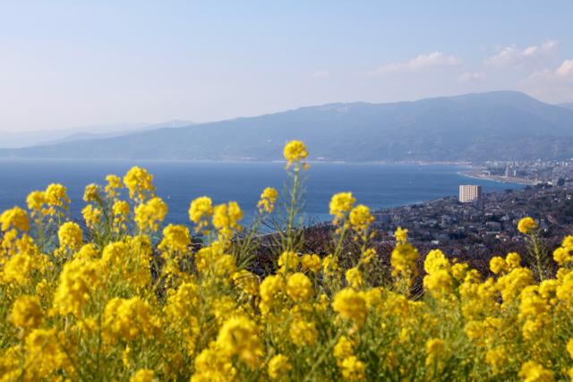 【吾妻山公園】part 1_f0348831_19183961.jpg