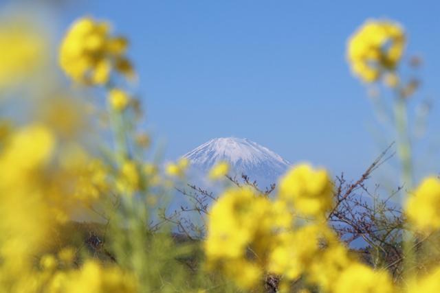 【吾妻山公園】part 1_f0348831_19183972.jpg