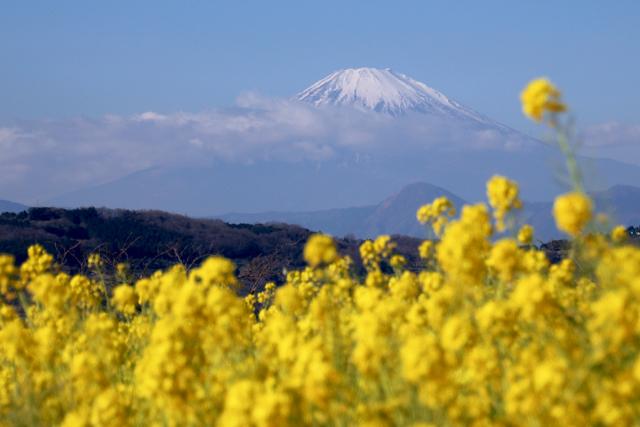 【吾妻山公園】part 1_f0348831_19183989.jpg