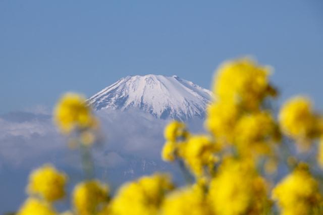 【吾妻山公園】part 1_f0348831_19184046.jpg