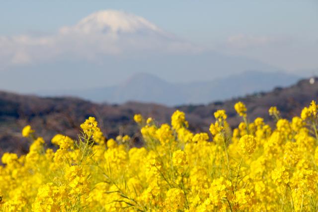 【吾妻山公園】part 1_f0348831_19184052.jpg
