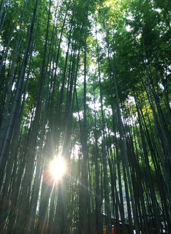 鎌倉 お寺と海_d0156336_135751100.jpg