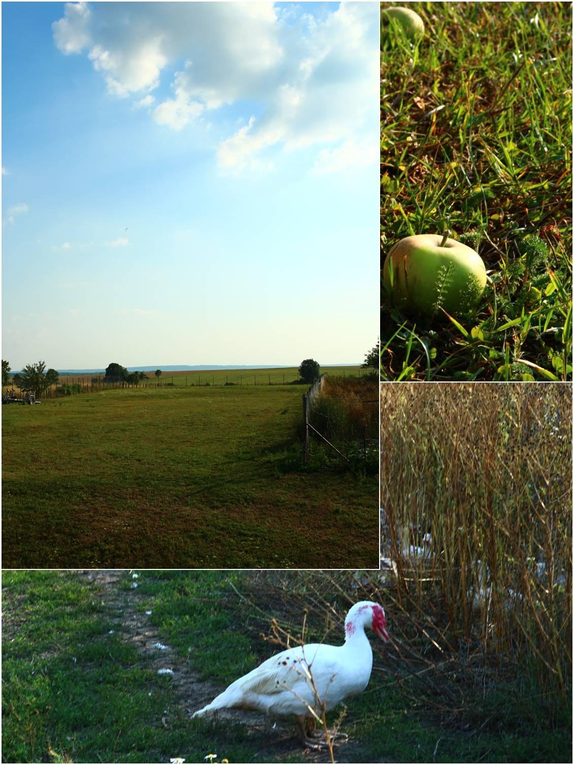 フランスのシャンブルドット 農場編_a0107981_1421457.jpg