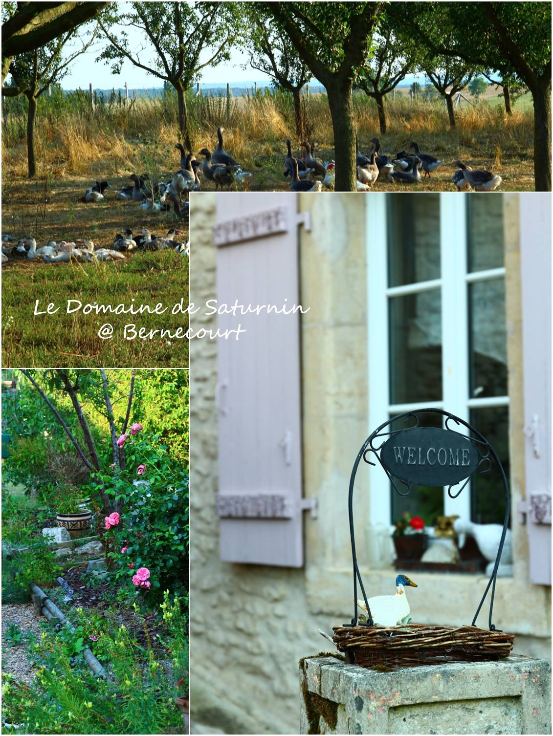 フランスのシャンブルドット 農場編_a0107981_14215221.jpg