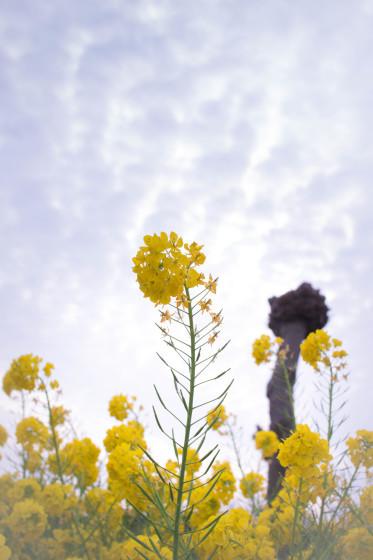 明石海峡公園 Vol.1_d0344864_21510799.jpg