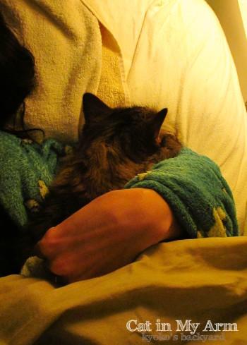 私の腕枕で眠る猫_b0253205_16373341.jpg