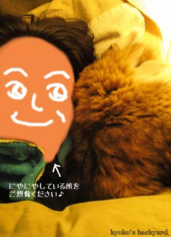私の腕枕で眠る猫_b0253205_16391694.jpg
