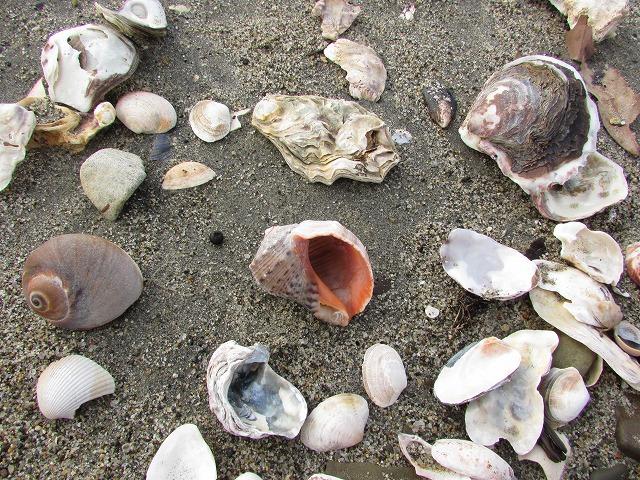 ツバキと黒の浜の風景_e0321325_15153746.jpg