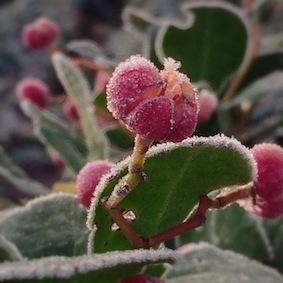 冬が来た!_f0309325_07523876.jpg