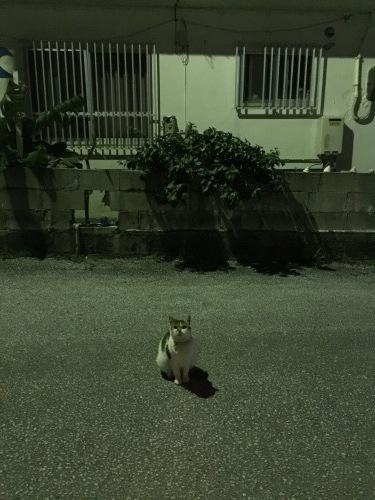 At night._c0153966_13115199.jpeg