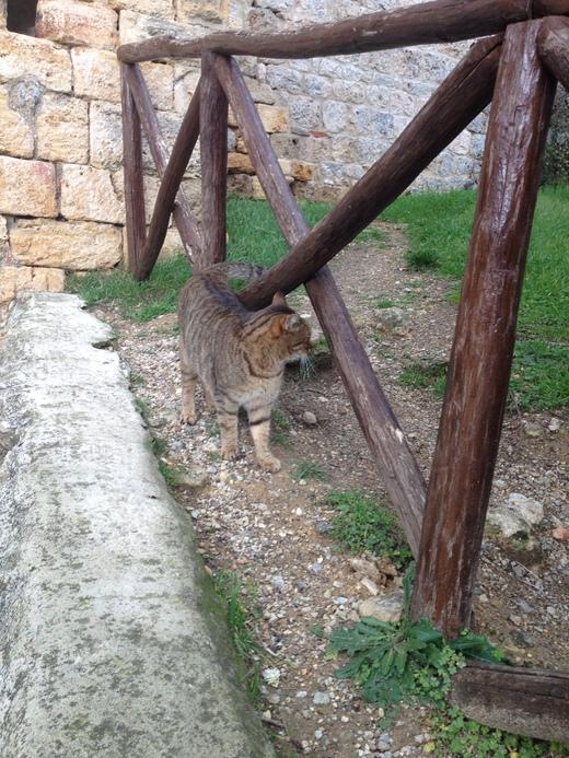 モンテリッジョーニの市壁、今月はお休みニャ♪_a0136671_028172.jpg