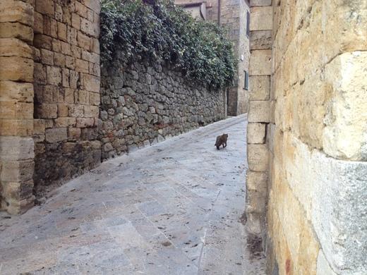 モンテリッジョーニの市壁、今月はお休みニャ♪_a0136671_0415154.jpg