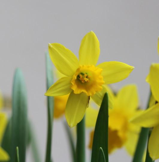 季節の花2016-1月_b0223198_16311068.jpg