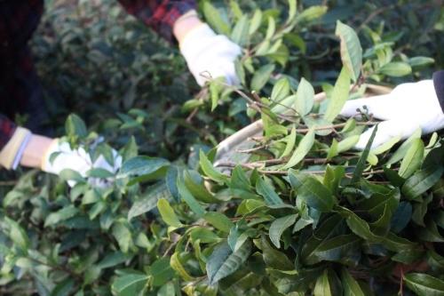 茶LON (29)_b0220318_06054689.jpg