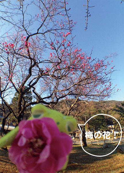 嵐山に少し早い春がありました!_a0129631_1349670.jpg