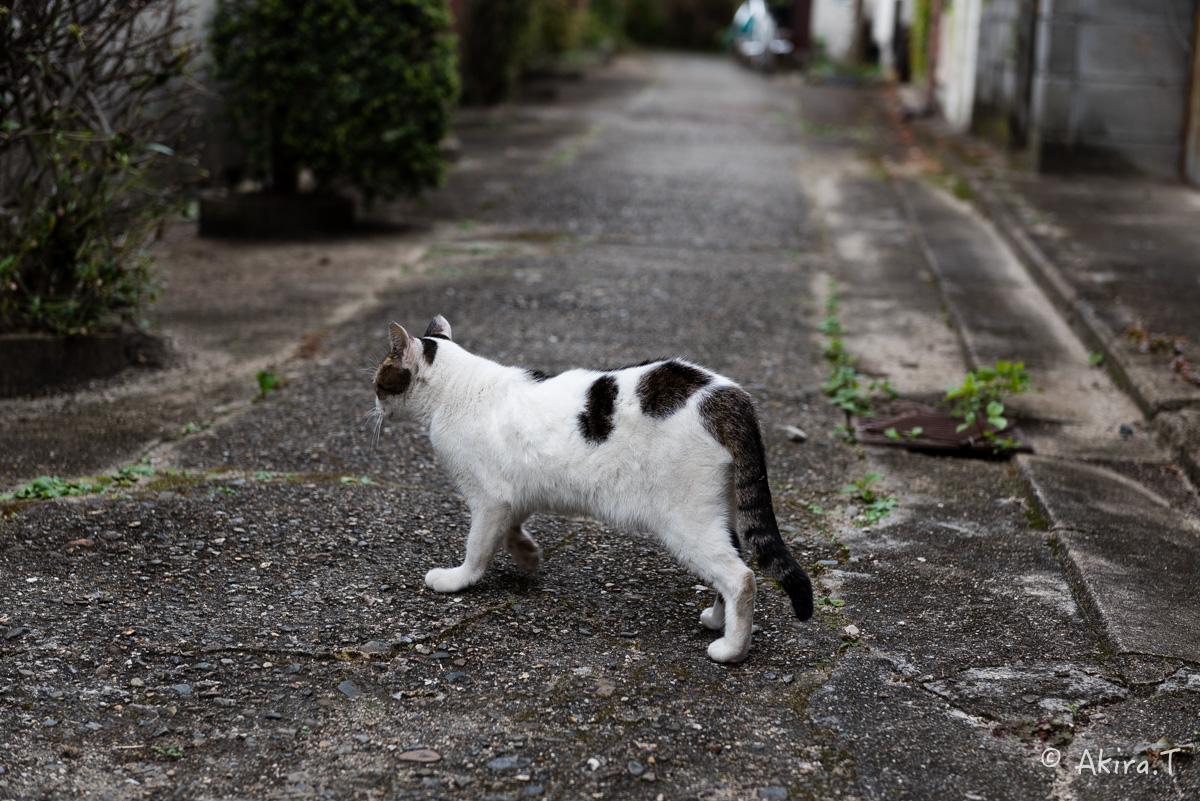 〜岩合光昭に挑戦〜 京都ネコ歩き -11-_f0152550_21374276.jpg