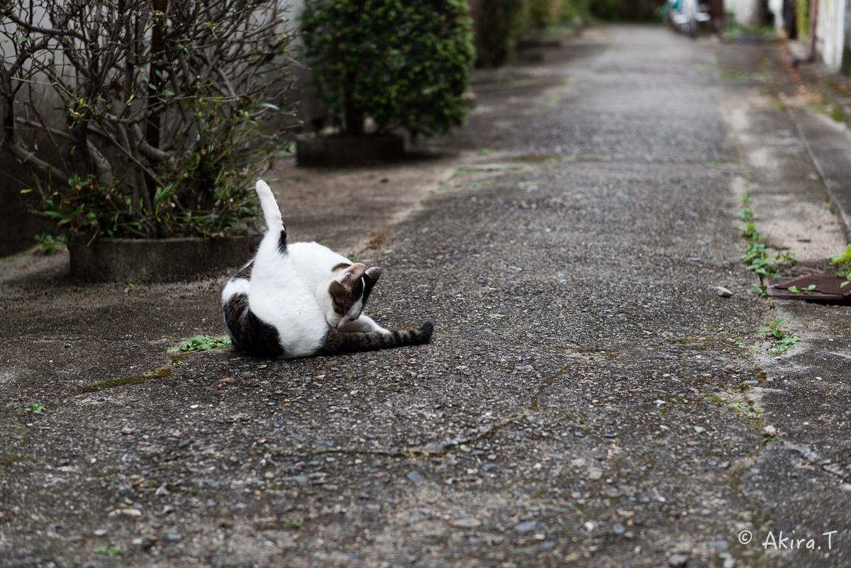 〜岩合光昭に挑戦〜 京都ネコ歩き -11-_f0152550_2137553.jpg