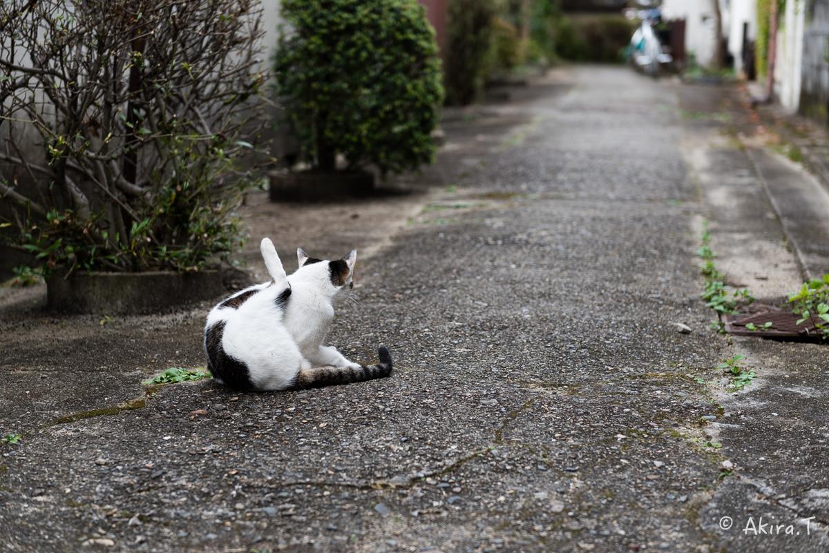 〜岩合光昭に挑戦〜 京都ネコ歩き -11-_f0152550_21381259.jpg