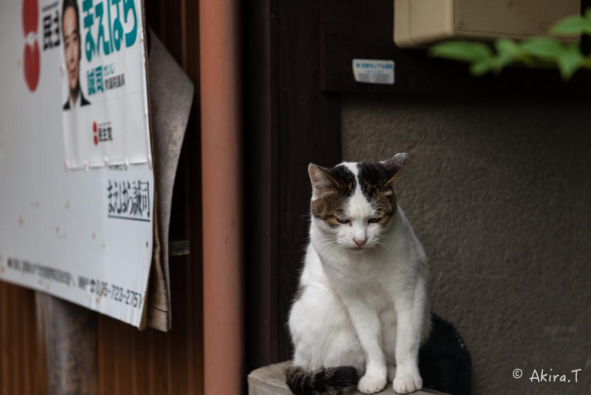 〜岩合光昭に挑戦〜 京都ネコ歩き -11-_f0152550_21394017.jpg
