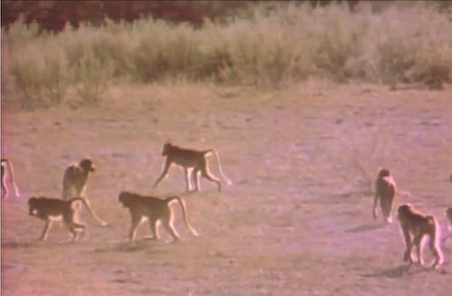 新配信映画は「動物映像大百科」第3巻_b0115553_10322269.png