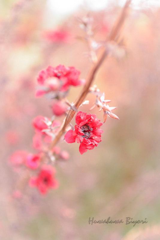 明石海峡公園 Vol.2_d0344864_20381542.jpg