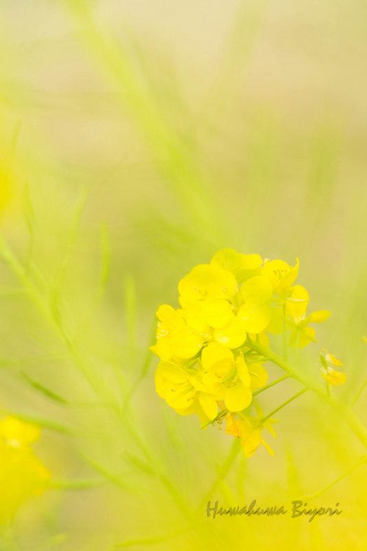明石海峡公園 Vol.2_d0344864_20384269.jpg
