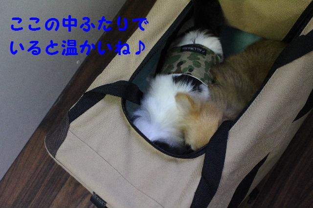 b0130018_221598.jpg