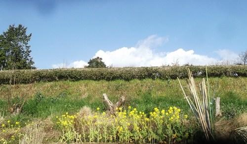 菜園の耕作..のんびりと!_b0137932_17453361.jpg