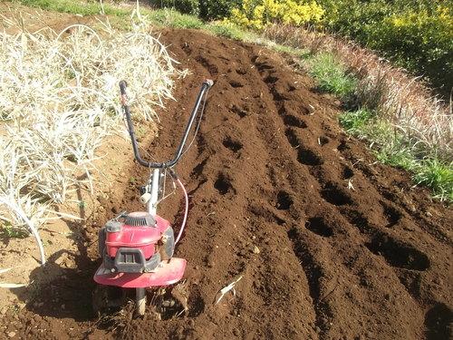 菜園の耕作..のんびりと!_b0137932_17461716.jpg