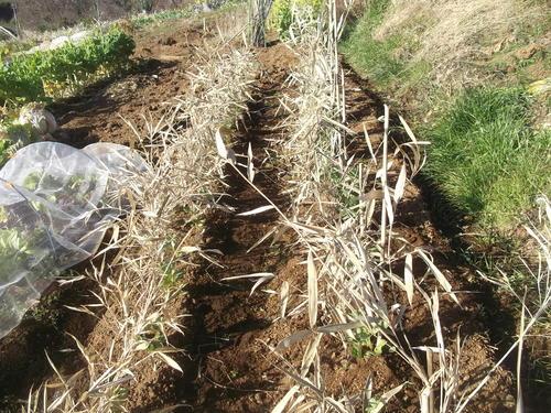 菜園の耕作..のんびりと!_b0137932_1747552.jpg