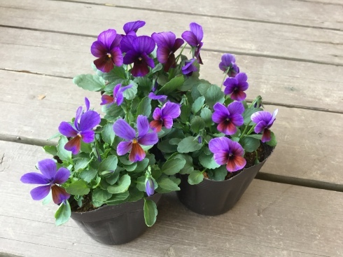 人に恋するように花との出会いも直感_b0137969_05572666.jpeg