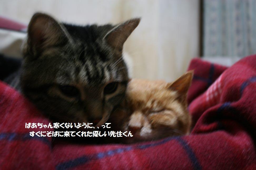 梅ばあちゃん 新生活スタート!_f0242002_047026.jpg