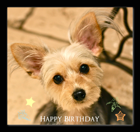 Happy Birthday♡Willyくん_d0060413_19522954.jpg