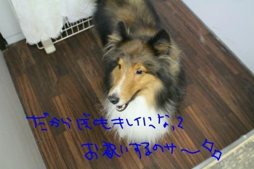スターウォーズ_b0130018_22421732.jpg