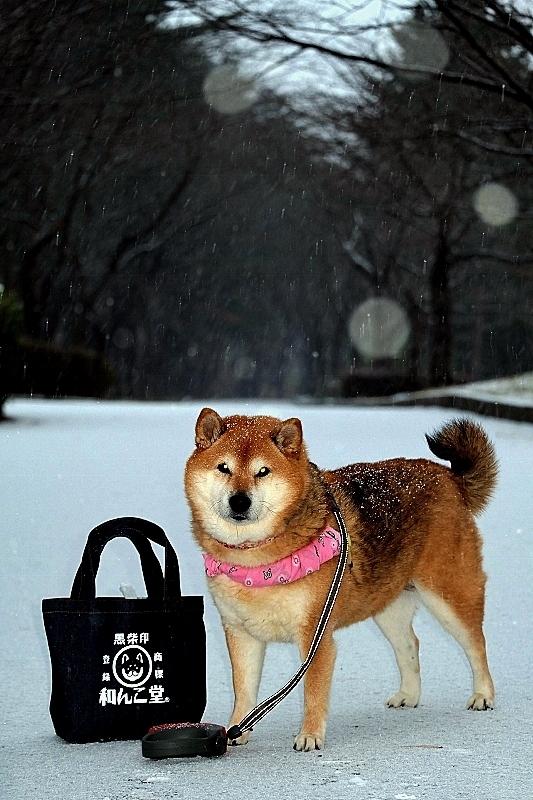 雪舞い_b0314043_07591528.jpg