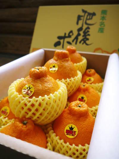 究極の柑橘「せとか」 収穫まであと1ヵ月!2月上旬の出荷に向け仕上げていきます!_a0254656_16441693.jpg