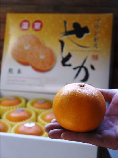 究極の柑橘「せとか」 収穫まであと1ヵ月!2月上旬の出荷に向け仕上げていきます!_a0254656_1733424.jpg