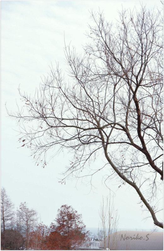 冬の風景_d0344864_16345659.jpg