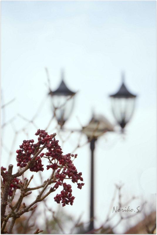 冬の風景_d0344864_16353554.jpg